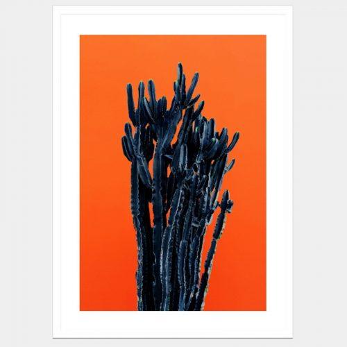 Barren Black Cactus - Flat Matte White