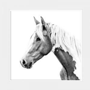 Belle Canvas - White Box Frame