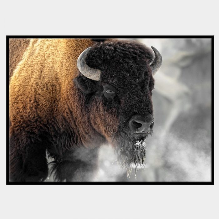 Buffalo Smoke Canvas - Front - Black Box Frame