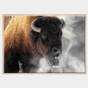 Buffalo Smoke Canvas - Front - Natural Box Frame