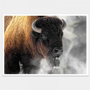 Buffalo Smoke - Flat Matte White