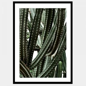 Caught In A Cactus - Flat Matte Black