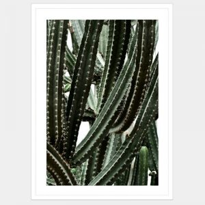 Caught In A Cactus - Flat Matte White