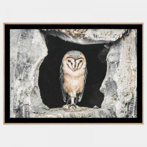 Concrete Owl - Boutique Gloss Black
