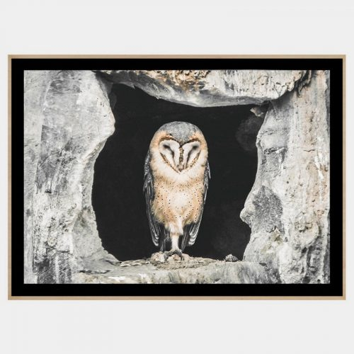 Concrete Owl - Boutique Gloss Black