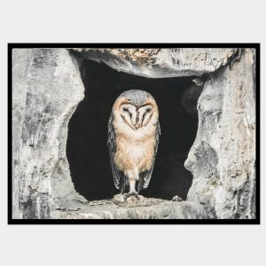 Concrete Owl - Flat Matte Black