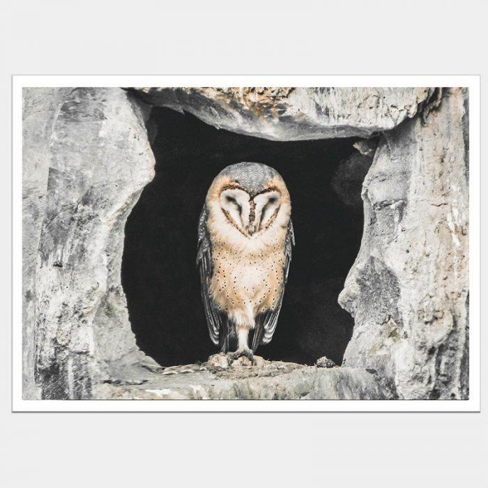 Concrete Owl - Flat Matte White
