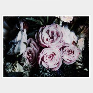 Darkness Roses - Flat Matte White