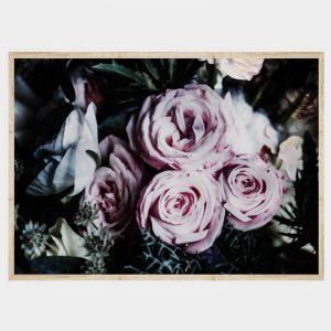 Darkness Roses - Flat Natural