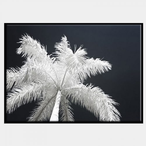 Ghost Palms Canvas - Black Box Frame
