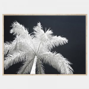 Ghost Palms Canvas - Natural Box Frame
