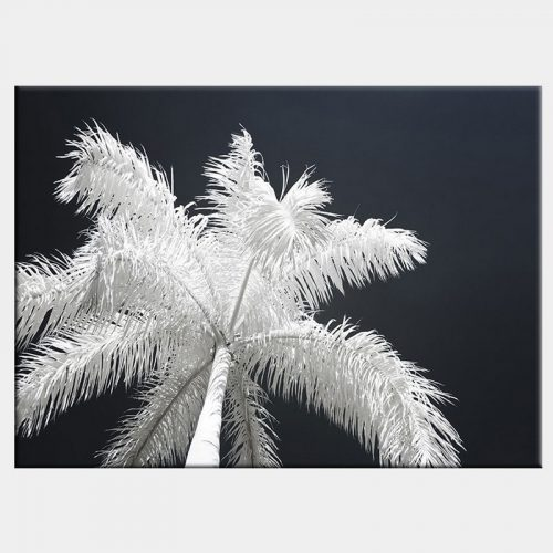 Ghost Palms Canvas - No Frame