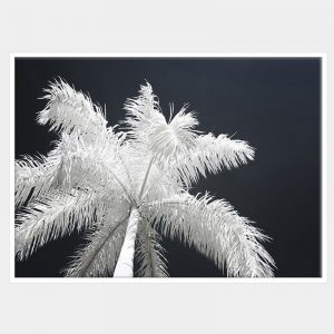 Ghost Palms Canvas - White Box Frame