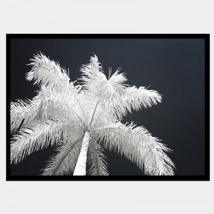 Ghost Palms - Flat Matte Black