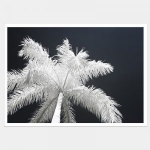 Ghost Palms - Flat Matte White