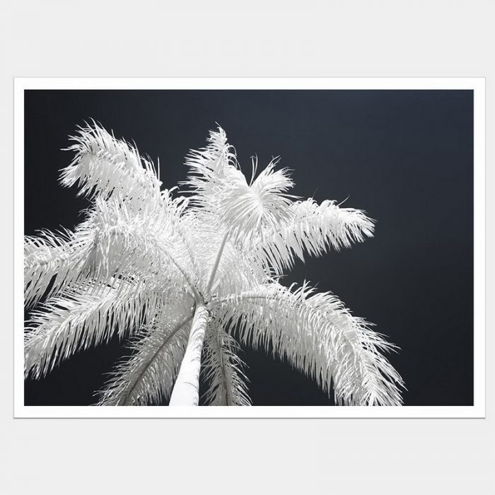 Ghost Palms - Flat Matte White