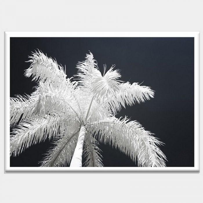 Ghost Palms - White Gloss