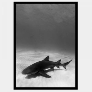Jaws - Flat Matte Black