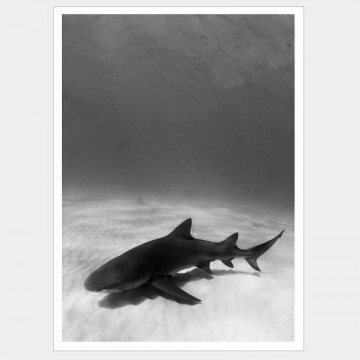 Jaws - Flat Matte White