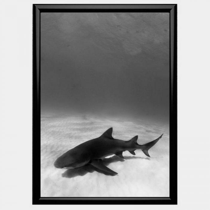 Jaws - Gloss Black