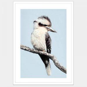 Kara The Kookaburra - Flat Matte White