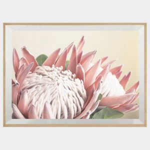 King Protea - Boutique Gloss White