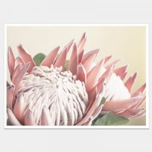 King Protea - Flat Matte White