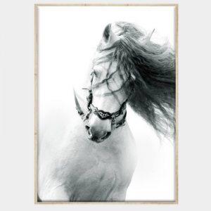 Lipizana Canvas - Natural Box Frame