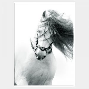 Lipizana Canvas - White Box Frame
