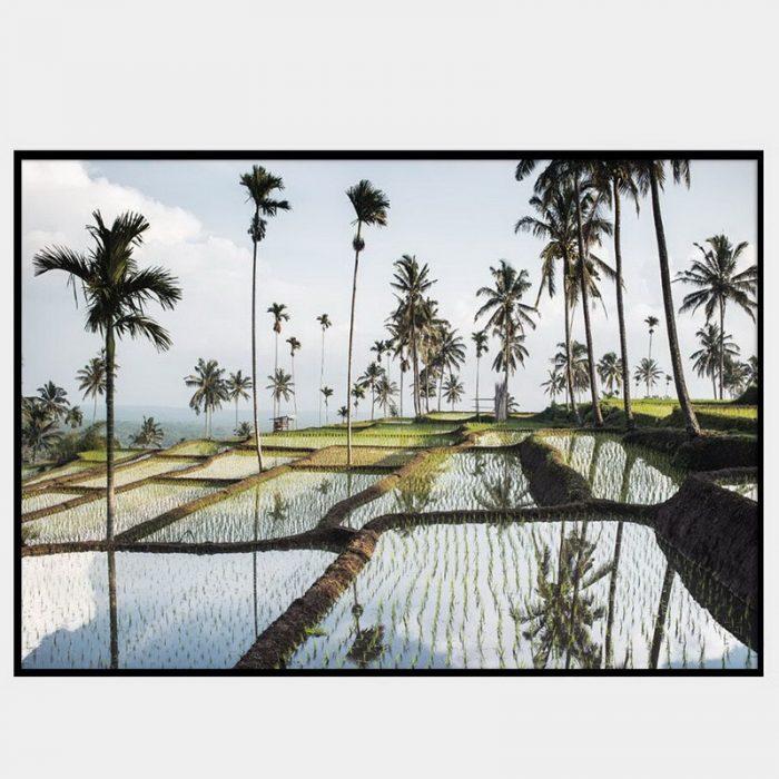 Lombok Fields Canvas - Black Box Frame