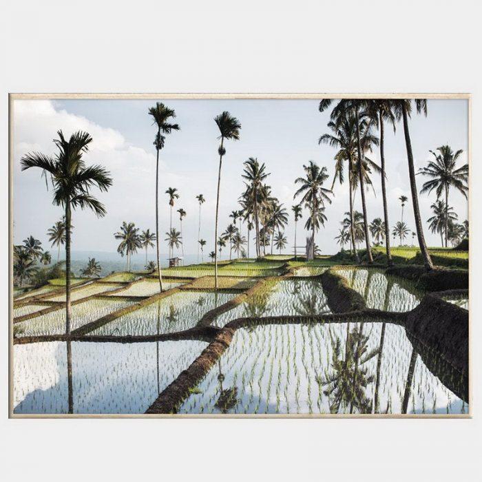 Lombok Fields Canvas - Natural Box Frame