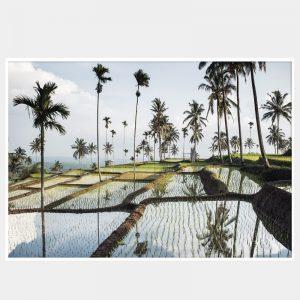Lombok Fields Canvas - White Box Frame