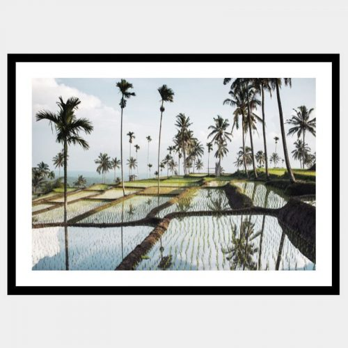 Lombok Fields - Flat Matte Black