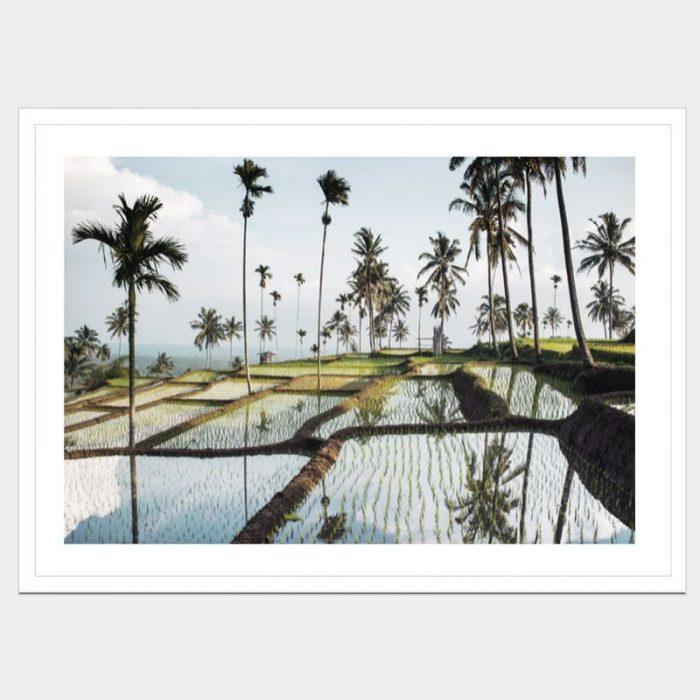 Lombok Fields - Flat Matte White