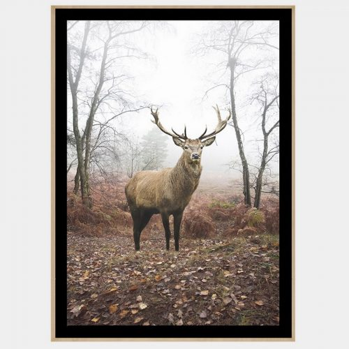 Mirkwood Stag - Boutique Gloss Black