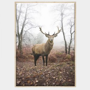 Mirkwood Stag Canvas - Natural Box Frame