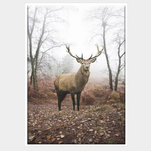 Mirkwood Stag Canvas - White Box Frame