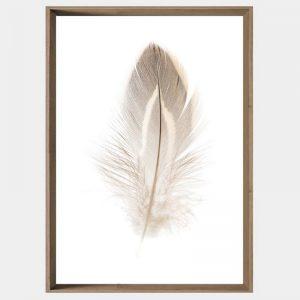 Plummet Feather - Caramel Angled