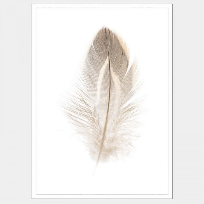Plummet Feather - Flat Matte White