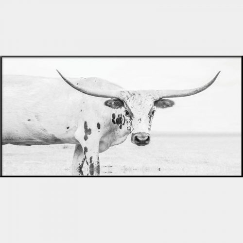 Texas Longhorn Canvas - Black Box Frame