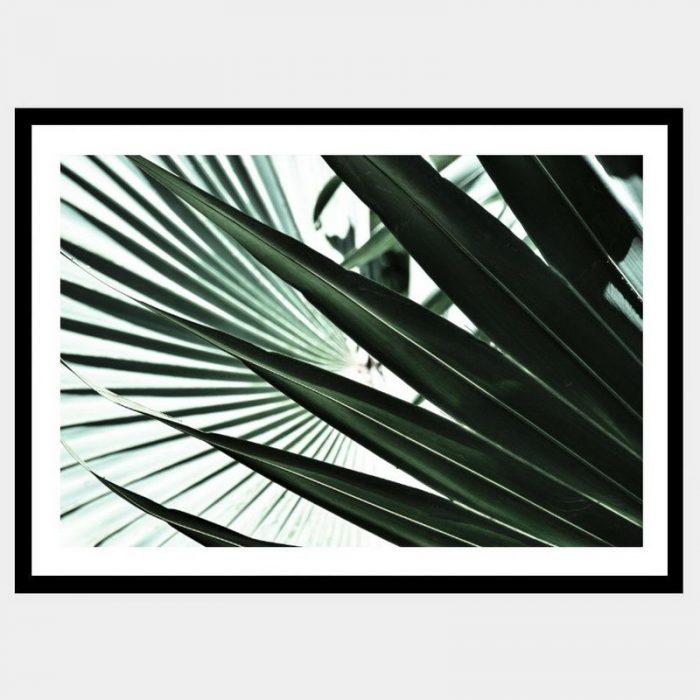 Tropic Fan - Flat Matte Black