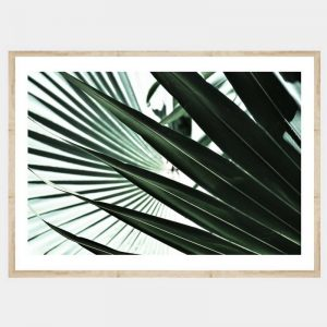 Tropic Fan - Flat Natural